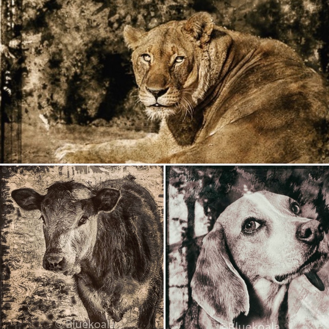 Béatrice Mane, artiste photographe animalière
